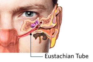 illustration of eustachian tube