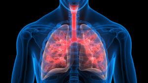illustration of lung interior